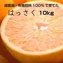 【ふるさと納税】特別栽培 はっさく(八朔)10kg   【発...