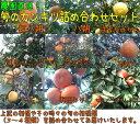 【ふるさと納税】柑橘セット 約10kg(3?4種類入り)※その時期の旬のみかん類詰め合わせ