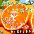 甘味たっぷり有田みかん10kg(S〜2Lサイズ)【お届け指定日不可】