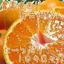 【ふるさと納税】農園直送!!有田みかん10kg【お届け指定日不可】