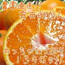 【ふるさと納税】農園直送!!有田みかん13kg【お届け指定日不可】
