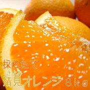 ふるさと オレンジ