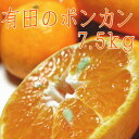 【ふるさと納税】有田のポンカン7.5kg(ご家庭用粗選別)