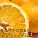 【ふるさと納税】有田の八朔10kg【1月下旬?お届け】