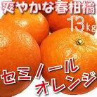【ふるさと納税】春柑橘セミノールオレンジ13kg【3月中旬より順次発送】