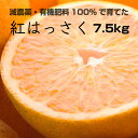 【ふるさと納税】特別栽培 紅はっさく7.5kg【減農薬栽培・...