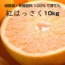 【ふるさと納税】特別栽培 紅はっさく10kg【減農薬栽培・有...