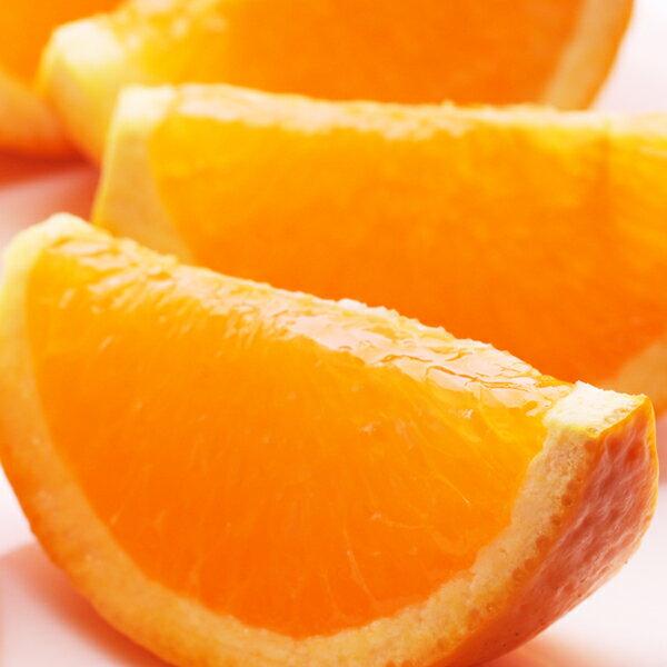 【ふるさと納税】<4月発送>樹上完熟清見オレンジ7.5kg