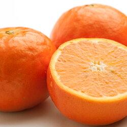 【ふるさと納税】<5月発送>セミノールオレンジ4kg 画像1