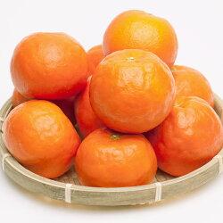 【ふるさと納税】<5月発送>セミノールオレンジ4kg 画像2