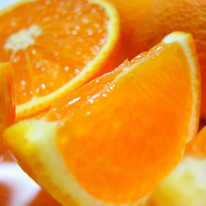 【ふるさと納税】【産地直送】濃厚清見オレンジ(ご家庭用) 約10kg