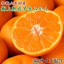 【ふるさと納税】紀州有田産早生みかんの樹上熟成みかん5kg(サイズ混合)