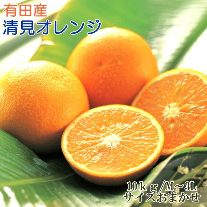【ふるさと納税】【濃厚】有田産清見オレンジ10kg(M〜3Lサイズおまかせ)