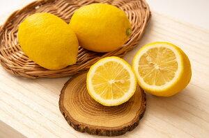 【ふるさと納税】和歌山県有田産 レモン 約3kg