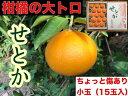 【ふるさと納税】【ちょっと傷あり】『柑橘の大トロ』 ハウスせとか15玉入※2020年2月上旬〜4月上旬頃に順次発送予定