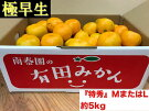 【極早生・有田みかん】『特秀』LまたはMサイズ/5kg