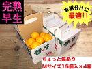 《手さげ箱》ちょっと傷【完熟早生・有田みかん】Mサイズ15個入×4箱