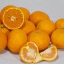 【ふるさと納税】蛍飛ぶ町から旬の便り なつみオレンジ訳あり10kg 平武農園※2020年5月中旬〜6月下旬頃発送