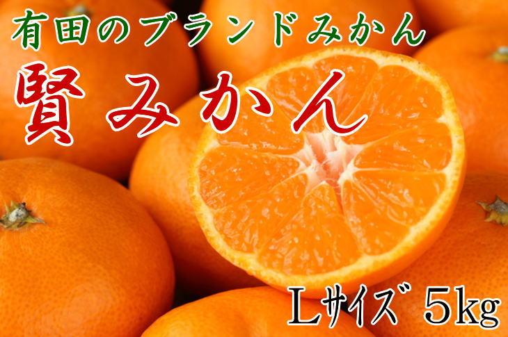 フルーツ・果物, みかん 5kg(L)20191112