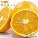 【ふるさと納税】【濃厚】有田産清見オレンジ約7kg(サイズおまかせ・秀品)※2021年2月上旬〜2月下旬頃に順次発送予定 ※着日指定送不可