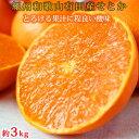 【ふるさと納税】とろける食感!ジューシー柑橘 せとか 約3k