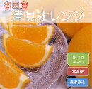 和歌山県有田産完熟清見オレンジひとつひとつ丁寧に厳選!生産者から直送