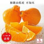 【ふるさと納税】【2021年3月上旬以降出荷】太陽の恵みがたっぷりと注がれた春の柑橘