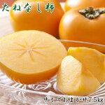 和歌山産の平たねなし柿約7.5kg(M・Lサイズおまかせ)