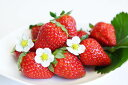 【ふるさと納税】春のお楽しみ大満足 和歌山のイチゴ『まりひめ...