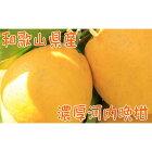 【ふるさと納税】【農家直送】【爽快柑橘】爽やか河内晩柑(ご家庭用)3.5kg