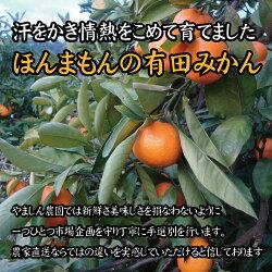 【ふるさと納税】\農家直送/こだわりの有田みかん 約7.5kg 有機質肥料100%  サイズ混合 【11月・12月・1月発送から選択できます】 画像1