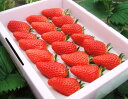 【ふるさと納税】246 鳥取産苺「あきひめ」大粒詰合せ いちご