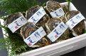 【ふるさと納税】072鳥取賀露港天然岩がき「夏輝」セット