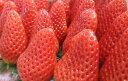 【ふるさと納税】【D-12】米村農園「大粒いちご」A