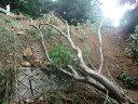 平成30年台風24号災害支援【鳥取県大山町ふるさと納税】【返礼品なし】...