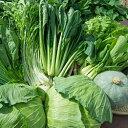 【ふるさと納税】【定期便】330.農家直送 弥栄産野菜おまか