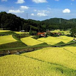 【ふるさと納税】568.浜田・旭のうまいもん「坂本」(特別栽培米つや姫)8kg(4kg×2袋)