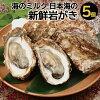 【ふるさと納税】A-215海のミルク日本海の新鮮岩かき