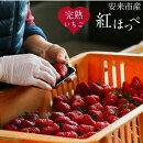 【ふるさと納税】いちご紅ほっぺ4トレー