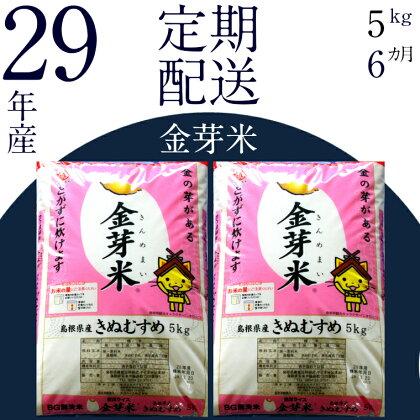 BG無洗米 金芽米 [定期] きぬむすめ  5kg/6ヵ月 米 無洗米 定期 島根県