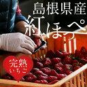 【ふるさと納税】 いちご 紅ほっぺ 4トレー 【12月発送開...