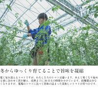 【ふるさと納税】MINORI3パックセットフルーツトマトトマトアイメック甘い