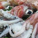 【ふるさと納税】鮮魚セットE 【魚貝類】 お届け:●納期の指定はできません。またご希望時間帯は午前中は承れません。