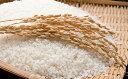 【ふるさと納税】島根県雲南産コシヒカリ10kg (5kg×2...
