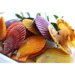 【ふるさと納税】イロトリドリヒオウギ貝10枚セット