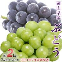【ふるさと納税】岡山県産ぶどう約2kg(2品種以上詰合せ)【2021年9月以降発送】(いばら愛菜館)