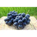 【ふるさと納税】岡山県産 ニュー ピオーネ 約2kg(4〜5房) 【果物類・フルーツ・果物・ぶどう】 お届け:2021年9月上旬〜2021年10月中旬