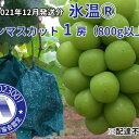 【ふるさと納税】黒川農園 の氷温貯蔵シャインマスカット 1房(約800g)※北海道、沖縄県、一部離島にはお届けできません。 【果物類・ぶどう・マスカット・フルーツ・果物】 お届け:2020年12月上旬〜2020年12月下旬