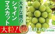 DD-56岡山のあま〜い「シャインマスカット」1房(大房)