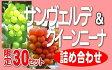 DD-40サンヴェルデ・クイーンニーナ詰め合わせ(2〜3房)